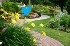 Twitter-bird-in-garden